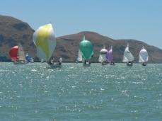 Lyttelton Harbour spinnakers