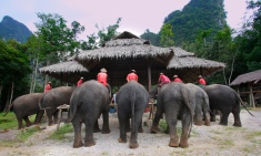 Preparing lunch for the elephants