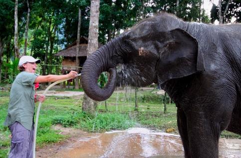 Washing the elephants