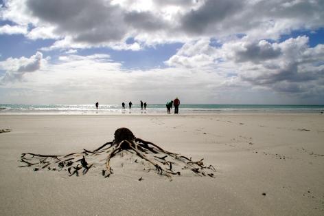 Ocean Mail Beach, Chatham Island