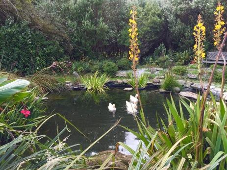 Admiral Gardens, Chatham Island